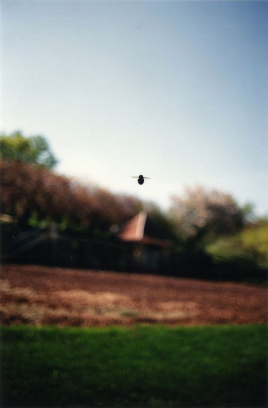 """Terri Weifenbach: Instruction Manual No. 2: 21. April 1996 (""""Bee"""") (One Picture Book #3), Limited Edition"""