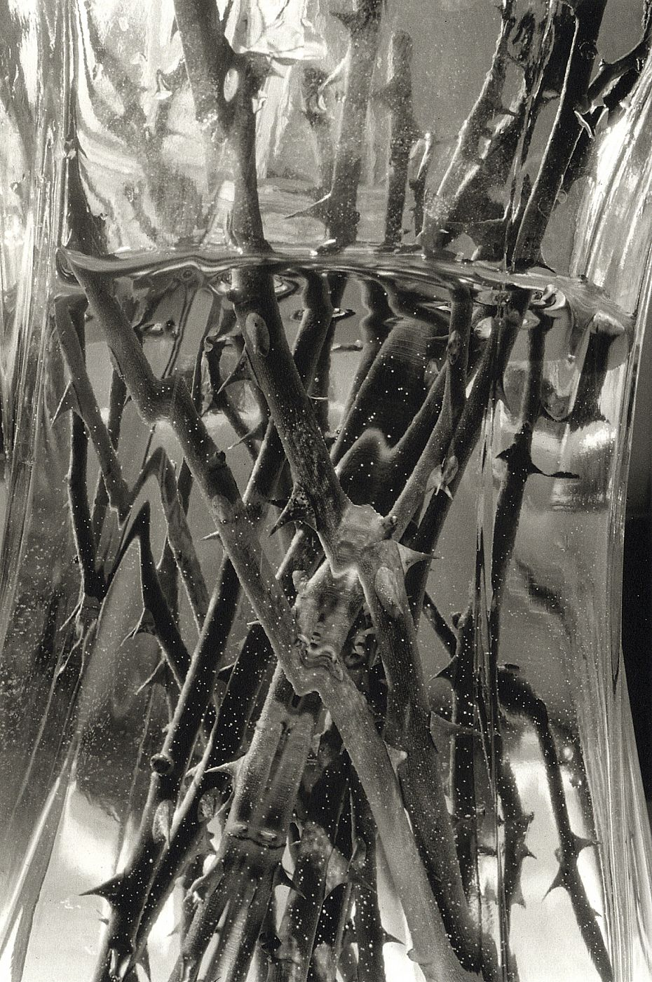 Lee Friedlander: Stems