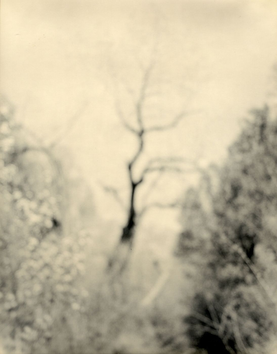 "Robert Stivers: Sestina, Limited Edition (with Toned Silver Print, ""The Clearing"" Variant)"