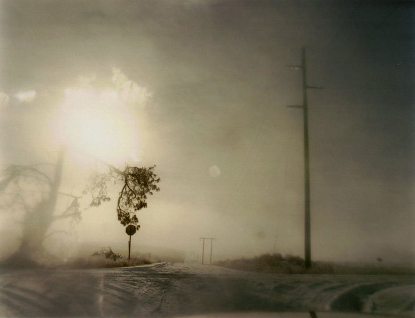 Todd Hido: Crooked Cracked Tree in Fog (One Picture Book #60), Limited Edition