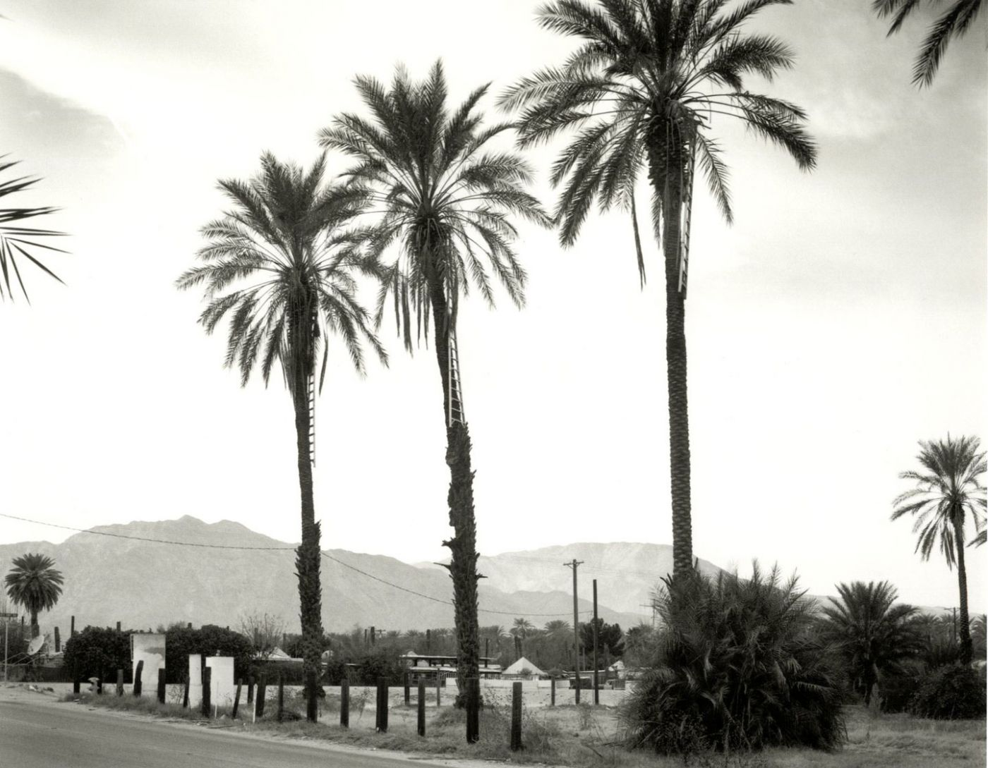 Mark Ruwedel: One Thousand Two Hundred Twelve Palms (1212 Palms) [SIGNED]