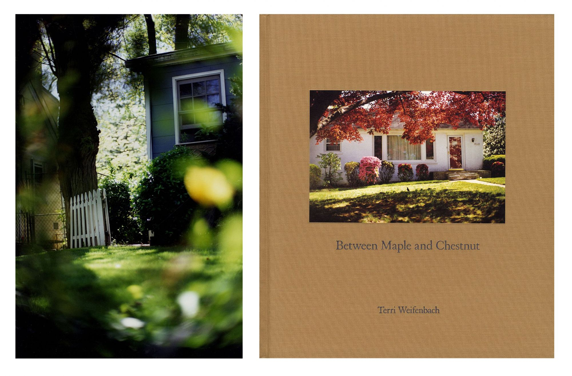 Terri Weifenbach: Between Maple and Chestnut, Deluxe Limited Edition (with Type-C Print)