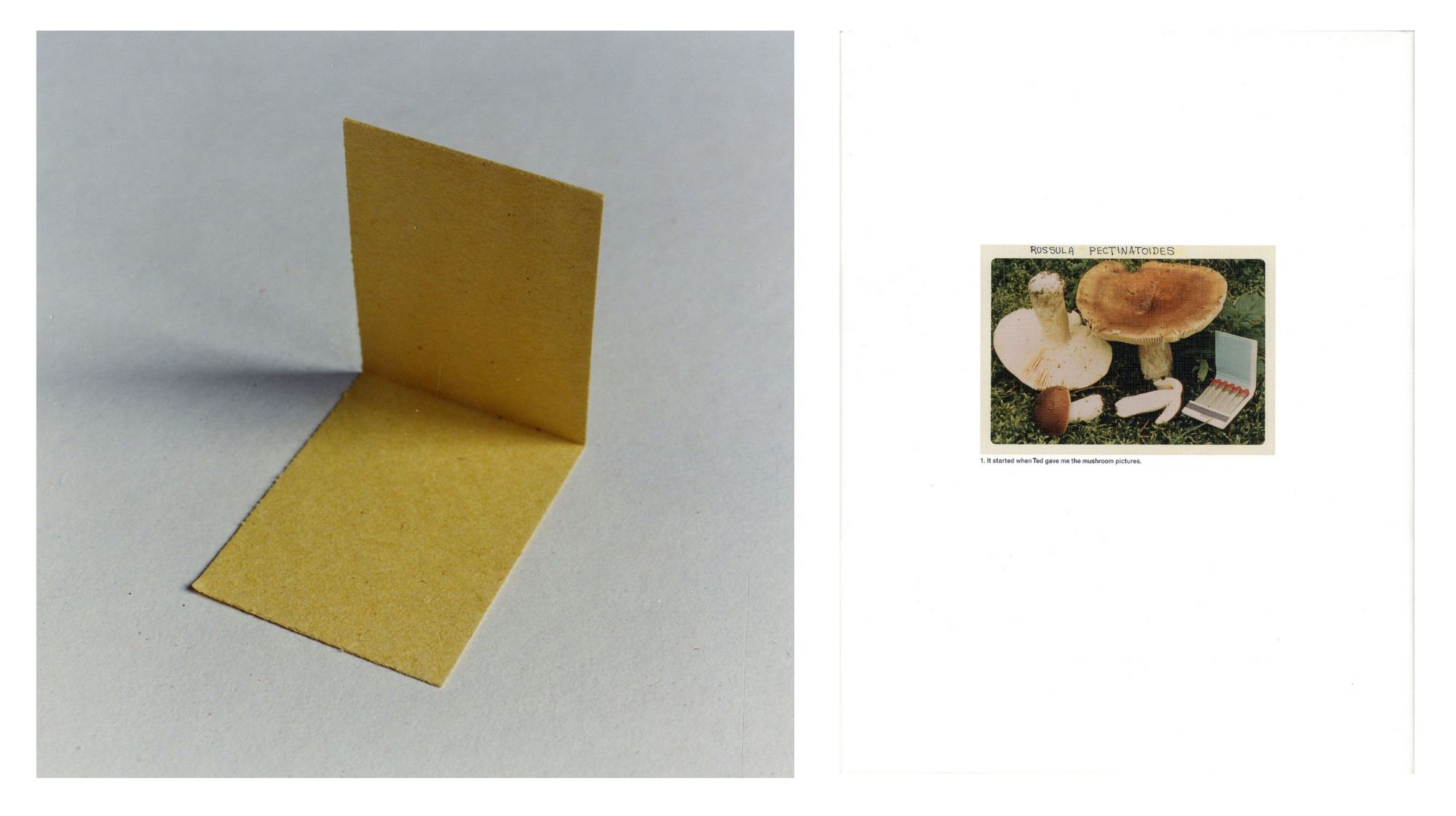 """Jason Fulford: The Mushroom Collector, Limited Edition (with Print, """"Folded Paper"""" Variant)"""