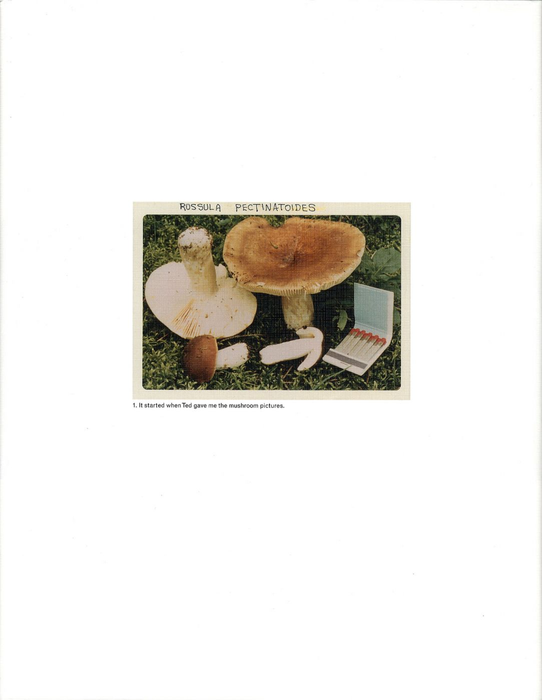 "Jason Fulford: The Mushroom Collector, Limited Edition (with Print, ""Folded Paper"" Variant)"