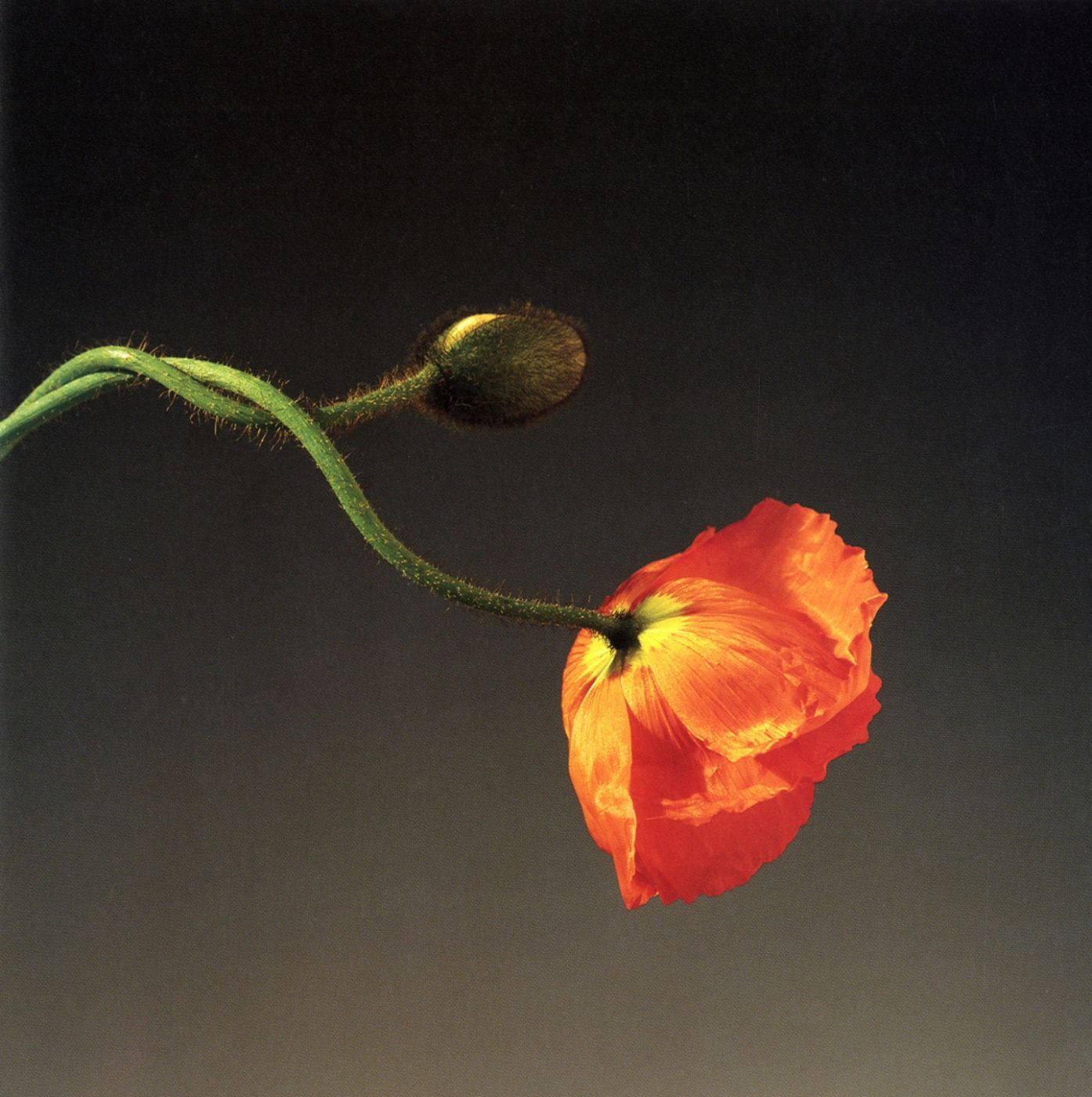 Robert Mapplethorpe (Whitney Museum of American Art)