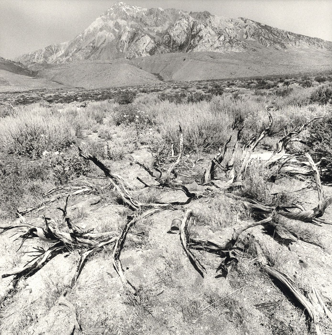Lee Friedlander: Recent Western Landscape 2008-09 (Mary Boone Gallery), Limited Edition [SIGNED]