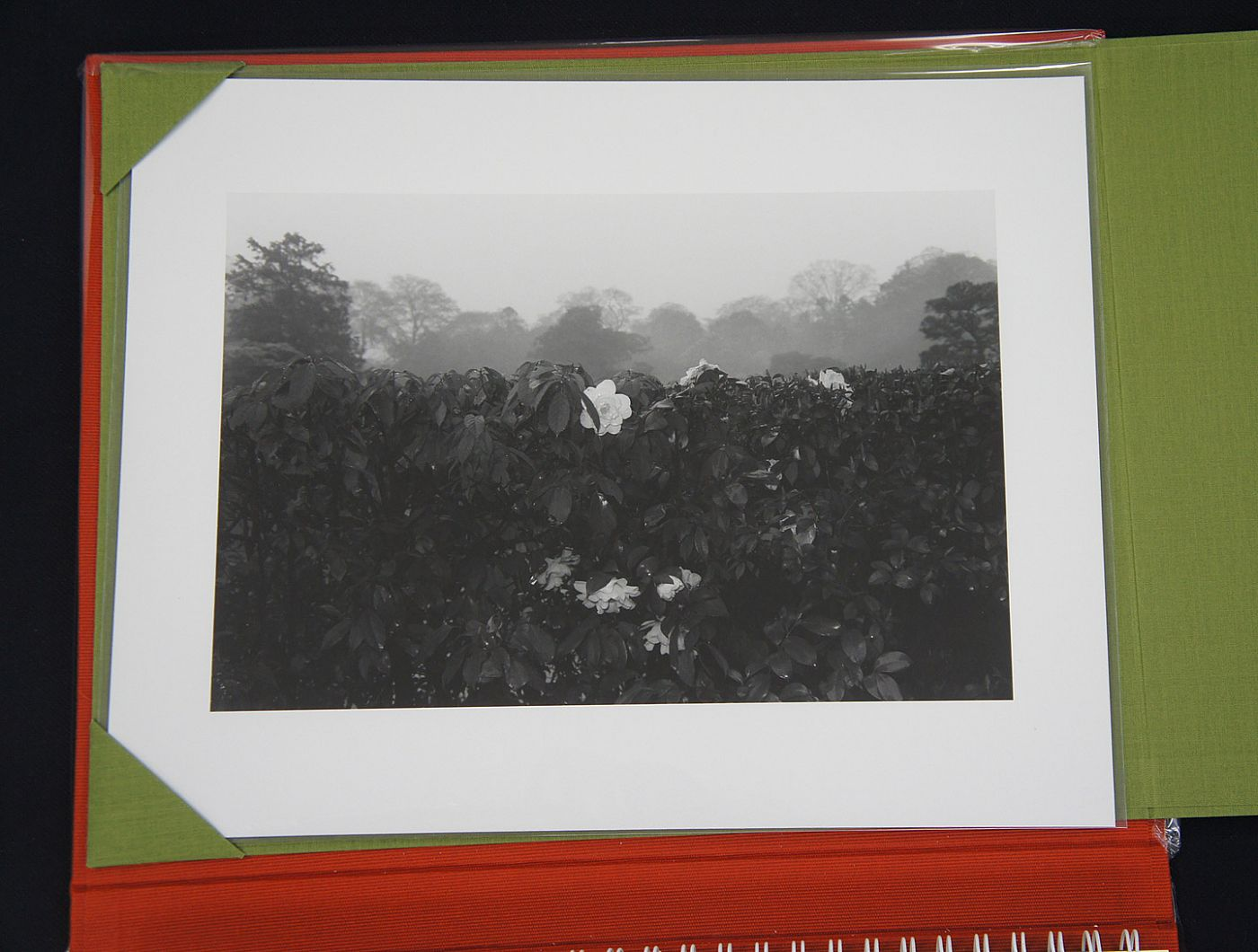 Lee Friedlander: Flowers and Trees (Special Limited Edition with One Vintage Gelatin Silver Print)