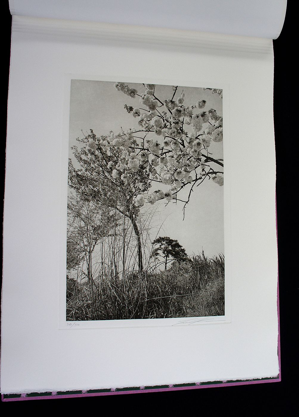 Lee Friedlander: Cherry Blossom Time in Japan (Special Limited Edition Book of 25 Photogravure Prints)