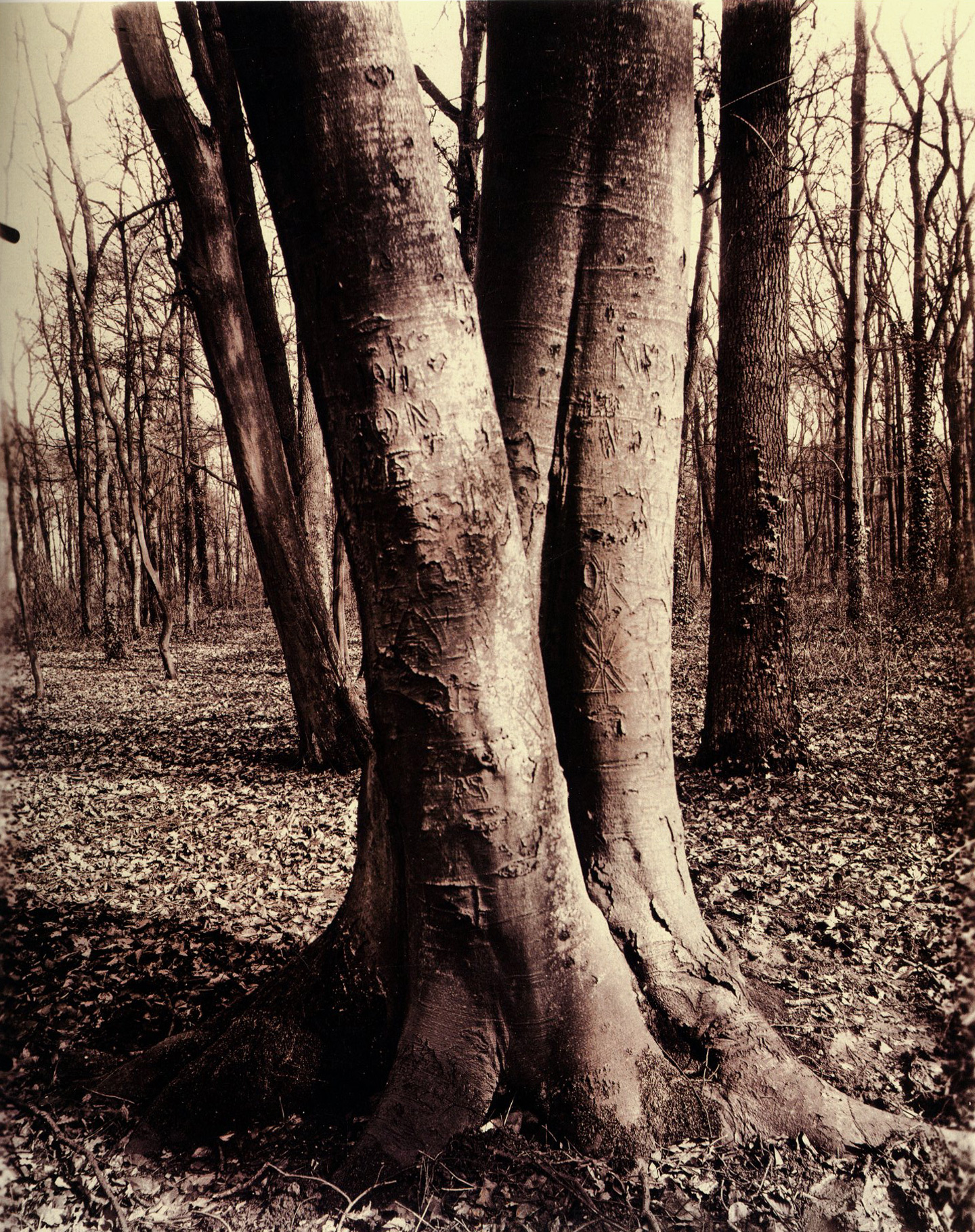 Eugène Atget's Trees: Newly Discovered Photographs from the Bibliothèque Nationale de France