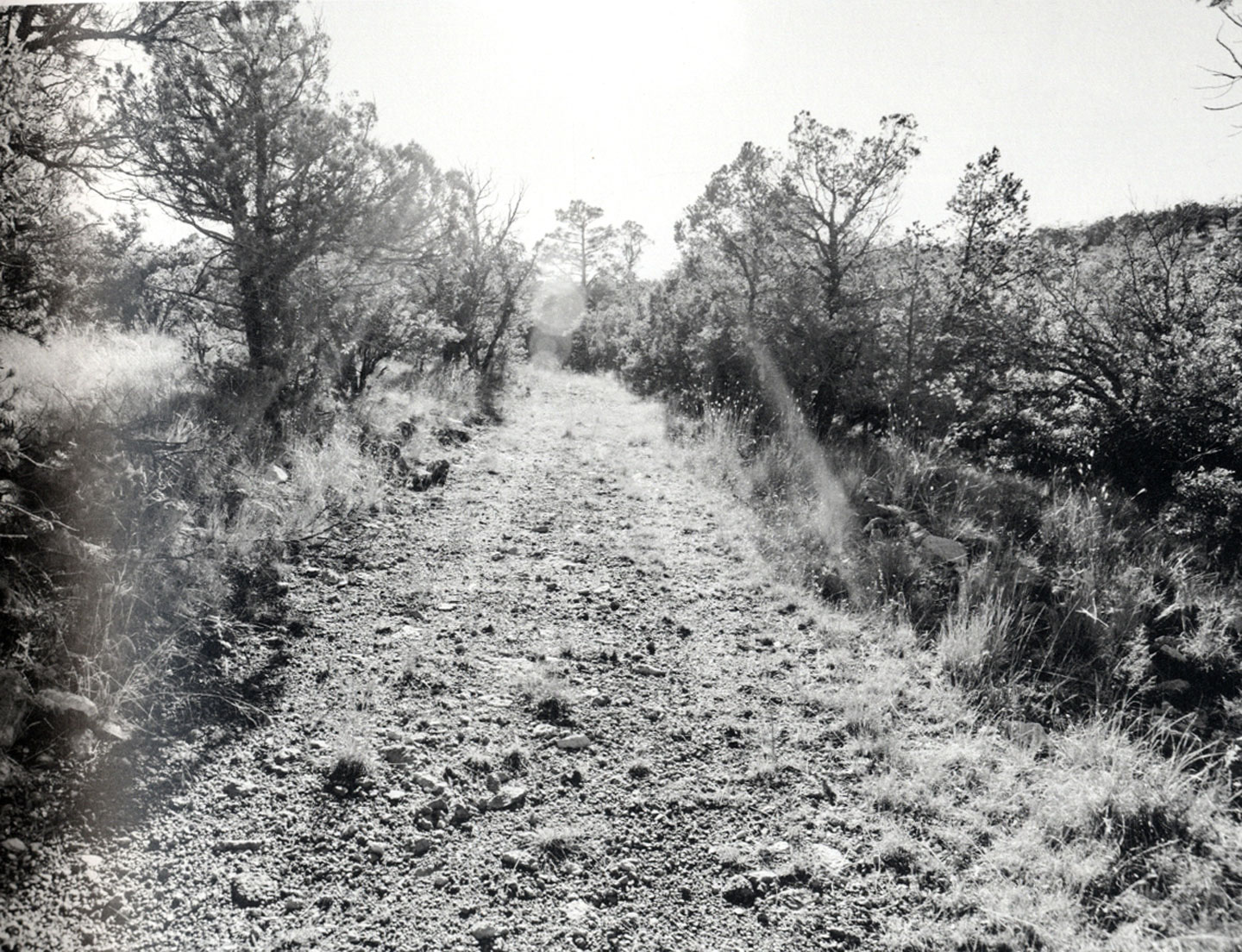 Christopher Wool: Road, Limited Edition [SIGNED]