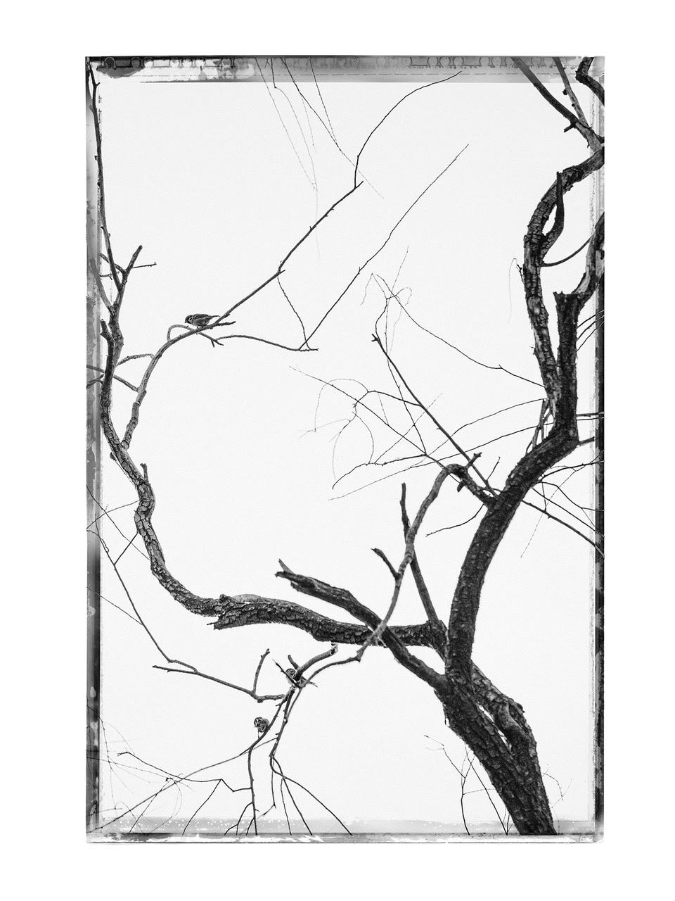 Kim Jungman: Can You Hear the Wind Blow, Special Limited Edition (with Unique Gelatin Silver Print, Edition of 1) [SIGNED]