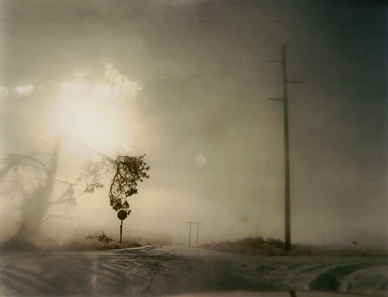 Todd Hido: Crooked Cracked Tree in Fog (One Picture Book #60), Limited Edition (with Print