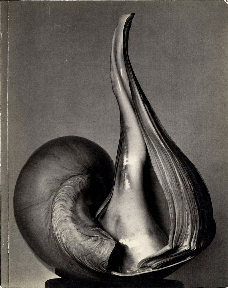 Untitled 41 (The Friends of Photography): EW 100: Centennial Essays in Honor of Edward Weston