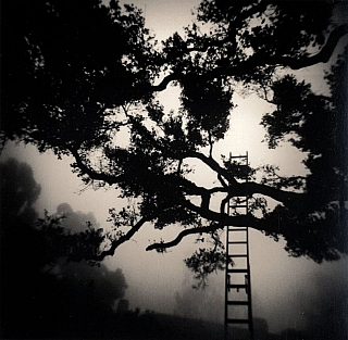 Michael Kenna: Montecito Garden (One Picture Book #41), Limited Edition (with Print). Michael KENNA