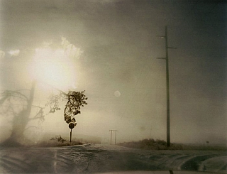 Todd Hido: Crooked Cracked Tree in Fog (One Picture Book #60), Limited Edition. Todd HIDO.